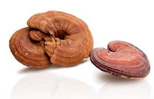 ganoderma-lucidum-spores-008
